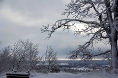 Snö som klamra sig fast intill en ek i molnig vinterhimmel för vinter royaltyfria foton
