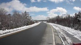 Snö som smälter av träd stock video