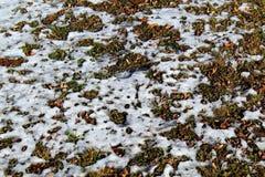Snö som smälter på jordningen Arkivfoto