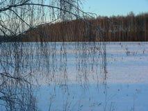 Snö-täckt äng med skogen i aftonen Royaltyfri Fotografi