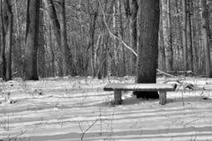 Snö täckt bänk i skogen royaltyfria bilder