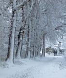 Snö-täckt bana som leder längs några träd på vintertid royaltyfri bild