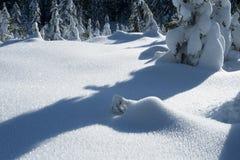 Snö täckt fält bredvid skog Arkivbild