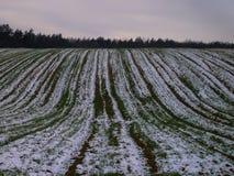 Snö-täckt fält på kanten av skogen arkivfoto