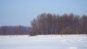 Snö-täckt fält, skog och en blå himmel stock video
