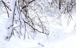 snö-täckt filial över en ravin Arkivbild