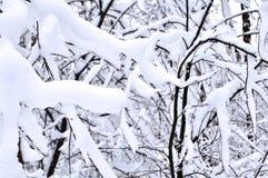 Snö-täckt filial i vinterskogen Arkivbild