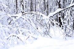 Snö-täckt filial i vinterskogen Royaltyfri Foto