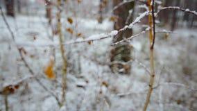 Snö-täckt filial med sidor i vinterskogen lager videofilmer