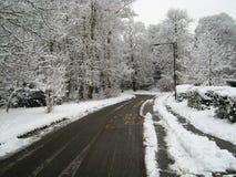 Snö täckt fodrad väg för vinter träd Royaltyfria Bilder