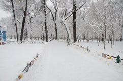 Snö-täckt gränd i parkera arkivfoton