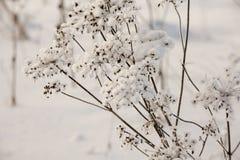 Snö-täckt gräs arkivbilder