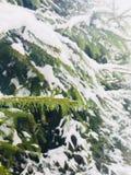 Snö-täckt gran i skogen Arkivfoto
