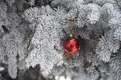 Snö täckt granträd med leksakbollen Arkivbild