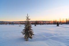 Snö-täckt granträd på bakgrunden av skogen i vinter Arkivbild