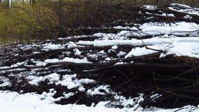 Snö täckt hög av filialer i Forest During Winter fotografering för bildbyråer