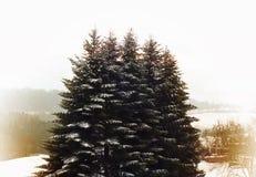 Snö-täckt höjd sörjer träd i en vinterdag Vinterlandskapet med sörjer trädet och snö arkivbilder