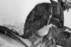 Snö täckt inloggning skogen royaltyfria bilder