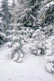 Snö-täckt sörja trädet Royaltyfria Bilder