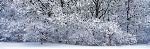 Snö-täckt skog Arkivbild