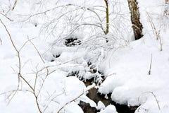 Snö täckt skog efter ett tungt snöfall Royaltyfri Foto