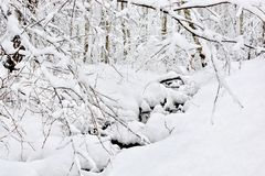 Snö täckt skog efter ett tungt snöfall Royaltyfri Fotografi