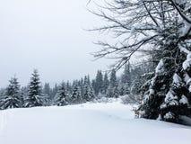 Snö-täckt skog i bergen royaltyfria foton