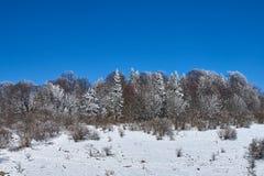 Snö-täckt skog, i förgrunden en snöig äng, mot bakgrunden - en blå himmel Lago-Naki den huvudsakliga caucasianen Ridge, R arkivfoto