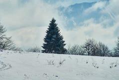 Snö-täckt skog, i förgrunden en snöig glänta, i det mellersta planet - ett enormt granträd, mot bakgrunden - en blå himmel L arkivfoto