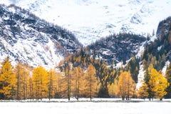 Snö-täckt skog i hösten royaltyfria foton