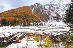 Snö-täckt skog i hösten arkivfoto