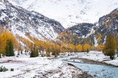 Snö-täckt skog i hösten arkivfoton