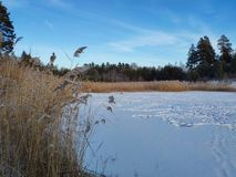 Snö-täckt skogsjö och sträng frost arkivbilder