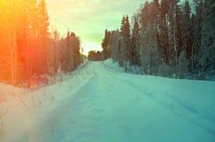 snö-täckt skogväg royaltyfria foton