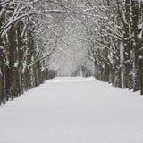 Snö-täckt stadsgata timmar liggandesäsongvinter räknade snowtrees Royaltyfri Fotografi