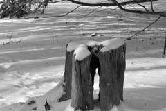 Snö täckt stubbe med hålet royaltyfria foton