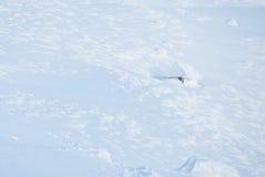 Snö-täckt stuga arkivfoto