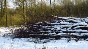 Snö täckt trä loggar in Forest During Winter arkivbilder