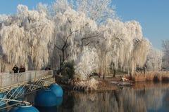 Snö-täckt träd över sjön royaltyfri bild