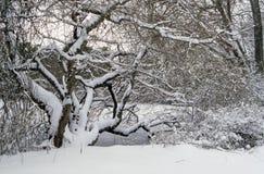 Snö täckt träd på dammkanten Fotografering för Bildbyråer