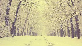 Snö-täckt trädgränd arkivfilmer