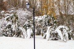 Snö-täckt trädlykta Royaltyfri Fotografi