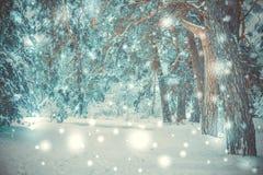 Snö-täckt trädväxtskog i vinter arkivfoto