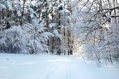 Snö-täckt väg i vinterskog Arkivbilder