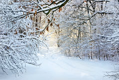 Snö-täckt väg i vinterskog. Royaltyfri Fotografi