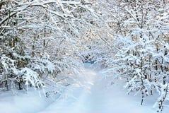 Snö-täckt väg i vinterskog. Royaltyfria Foton
