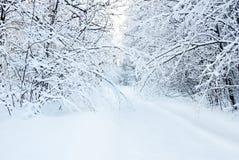 Snö-täckt väg i vinterskog. Royaltyfria Bilder
