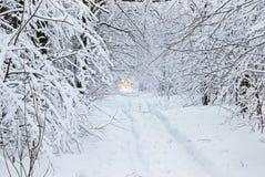 Snö-täckt väg i vinterskog. Arkivfoto