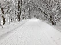 Snö-täckt väg till skogen Royaltyfri Foto