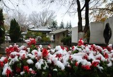 Snö-täckte blommor Arkivfoton
